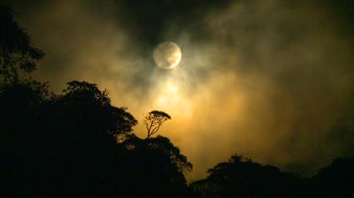 Full Moon In Jungle